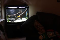 This is my 36g bowfront aquarium. All the fish, with the exception of four Green Cories are African Cichlids.