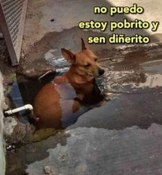 puedo, nao, posso, cachorros, caes, dogs Animal Captions, Animal Memes, Funny Animals, Cute Animals, Meme Faces, Funny Faces, Cat Memes, Dankest Memes, Memes Gretchen