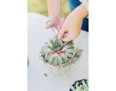 Succulent Crown DIY | Camp Makery