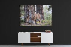 Foto op plexiglas Moose Art, Prints, Animals, Animais, Animales, Animaux, Animal, Dieren