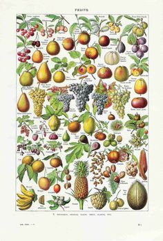 Fruits Vintage French Dictionary Color Illustration