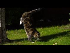 Cat Jumping in Slow Motion - The Slow Mo Guys...wow seems common looks amazing in slo mo