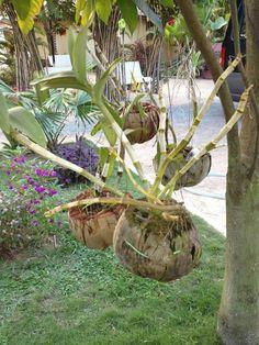 How To Keep Orchids Alive And Looking Gorgeous Hanging Garden, Orchids Garden, Plants, Backyard Flowers, Garden Kits, Garden Crafts, Tropical Garden, Flower Garden, Beautiful Orchids