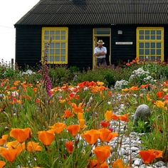 Before all this new waves leaded by Piet Oudolf, the most evocative sample of a 'wild' garden to me was the Derek Jarman's cottage in Dungeness. It's simple and humble with its totemic sculptures and bright poppies, marigolds, irises and dog roses but it's extremely evocative and rich in poetry: it's the work of a plant lover, a curious sculptor and brilliant man, and you can breath his vitality in every inch of the garden. Photo taken from…