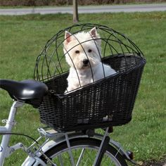 Trixie Rear-Mounted Bicycle Basket - Black: Bike basket with a wire mesh cover for use with dogs up to Basket bracket attaches to a rear pannier rack Dog Bike Carrier, Biking With Dog, Bicycle Basket, Dog Basket For Bike, West Highland Terrier, White Terrier, Bicycle Accessories, Accessories Online, Small Dog Accessories
