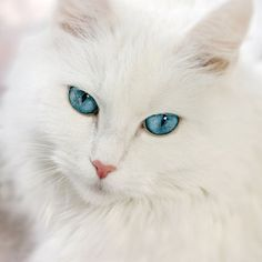 Soft and pretty blue eyes...