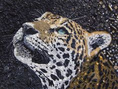 These Animal Portraits Are Not What They Look Like