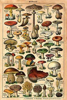 different type of mushrooms