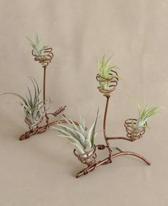 Abstract Spiral Air Plant Holders - All For Herbs And Plants