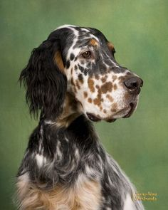 I Love Dogs, Cute Dogs, English Setter Puppies, Dog Rules, Irish Setter, Cute Little Animals, Dogs And Puppies, Doggies, Dog Paintings