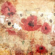 Sunset Poppy Field I by Irena Orlov Painting Print on Wrapped Canvas