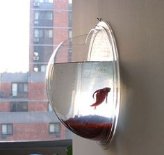 Wall fish bowl! So cute... and takes up no counter space!