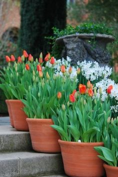 Forced orange tulips look really sweet against the brick dwelling.
