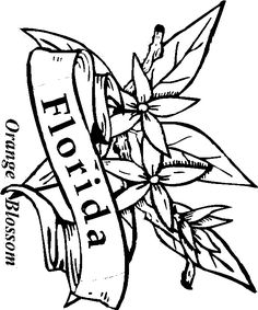 images of florida state flowers coloring pages google search