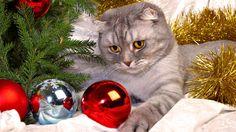 CUTE PICS PARADE | Funny Christmas cats (4 pics).