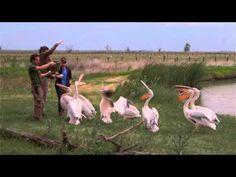 Hortobágyi Nemzeti Park - YouTube National Parks, Google, Youtube, Travel, Animals, Viajes, Animales, Animaux, Destinations