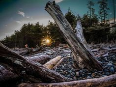 Its @jrbm.ca again testing out the new #Fujifilm #GFX50S medium format camera on an adventure to #HaidaGwaii.   The rising sun glints off frost-covered driftwood at #AgateBeach in #Naikoon Provincial Park Haida Gwaii. With 235 wet days per year on average sunny mornings are extra sweet on Haida Gwaii.   Keep following along for more updates from my Fujifilm Haida Gwaii adventure! #travel #fujifilm_x #GFX #mediumformat #FujiGoesToHaidaGwaii #myfujifilm #guestpost  via Fujifilm on Instagram…