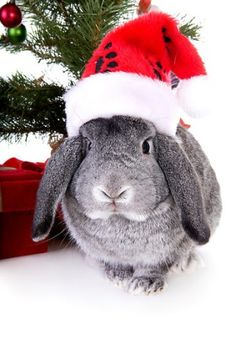 Snobody loves Christmas more than this little bunny. Christmas Critters To Warm Your Winter Heart!
