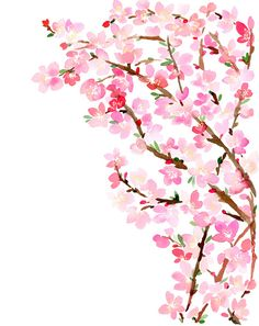 1000drawings: Cherry Blossoms by Yao Cheng