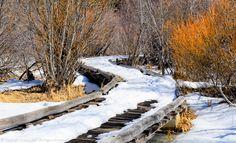 Wooden Walkway, Snow, Trees