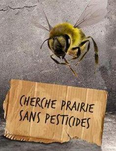Vous imaginez un monde sans miel? Ça va venir si on continue de répandre de la merde sur nos champs!
