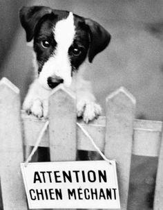 """""""Pindo"""" le chien bâtard, photo de René Maltête (1930-2000) photographe français dont la particularité était de fixer sur sa pellicule des images insolites et humoristiques."""