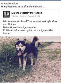 Thor er løbet og har brug for hjælp
