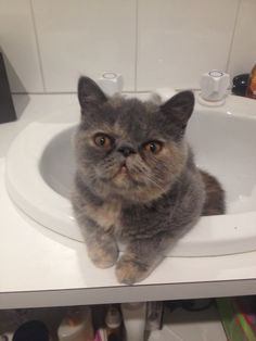 Gucci Cat | Pawshake Croydon