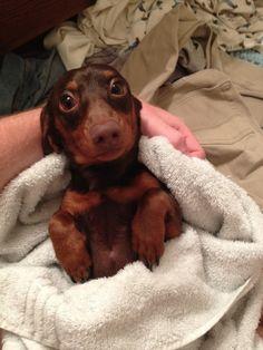 I Dry Him Off After A Bath