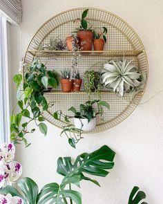 Circle Shelf, Shelf Inspiration, Plant Shelves, Kitchen Shelves, New Room, Room Organization, Plant Decor, Restoration, Planter Pots