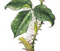 Algo de Plantas: PLAGAS Y ENFERMEDADES