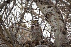 ITAP of an owl this morning. http://ift.tt/2n3cvdF