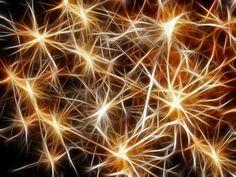El experimento con roedores ha resultado exitoso al rescatar los recuerdos con ráfagas de luz.