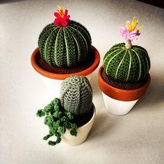 magicphylum:  New cacti!