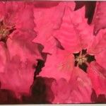How to paint a poinsettia in watercolor by Deb Watson. Christmas card ideas on this site.