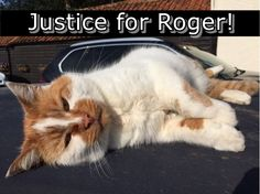 Petitioning: RSPCS Essex Roger is a 15-year-old cat that was shot and stamped until it passed away. The whole thing was caught on camera. There it is clea