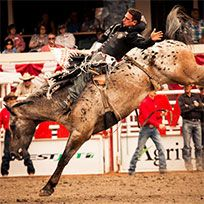 Stampede Ranch - Calgary Stampede 2015