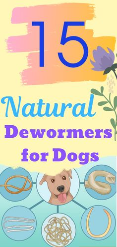 Help Your Pet get rid of worms with these natural dewormers you probably have already at home. dewormer for dogs Dog Worms, Natural Dewormer For Dogs, Flea Spray For Dogs, Flea Treatment, Dog Products, How To Get Rid, Dog Care, Dogs