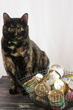 Stock up and save on Fancy Feast and Friskies at PetSmart! Miss Kitty is all set with a stock pile of can cat food! Find the PetSmart near you! #PetSmartCart #ad