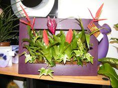 La photo du jour #2 via le petit blog de fleurs d'avenir ( cadre végétal, tableau végétal, cadre floral, tableau floral) on @Pinterest