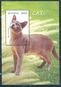 "Guyana_2007_""Cats""_souvenir_sheet_Stamps-Marlen Stamp and Coins Ltd."