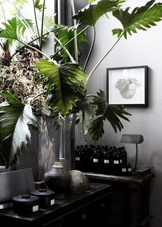 Monstera plant- find at Pikes. Interior Plants, Interior Exterior, Interior Architecture, Botanical Interior, Indoor Garden, Indoor Plants, Home And Garden, Indoor Outdoor, Palm Plants