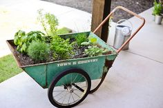 Wheely herb garden! So clever
