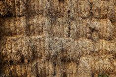 [#ViandesRacées] Si pendant la belle saison, les #Charolaises de Marie-Jo profitent d'une herbe toujours fraîche et de l'incroyable #biodiversité qu'offrent les différents #pâturages, l'hiver, elles se nourrissent du #foin de l'exploitation et de #céréales produites sur place, en auto suffisance ! 🌍  #campagne #nature #agriculture #agripics #agriculturelife #environnement #nature #terroir #viande #viandes #viandesdexception #viandefrancaise #viandedequalite #BourgogneFrancheComte #France