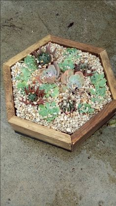 Recycled wood hexagonal succulent box