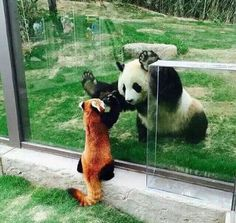 Giant Panda and Red (or Lesser) Panda. Oh Hai Big Panda! Oh Hai Lil Panda!