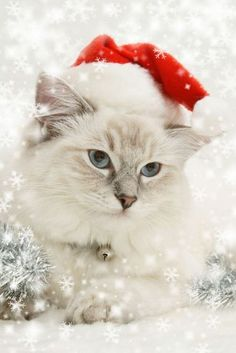 Beautiful Animals Dressup For Christmas