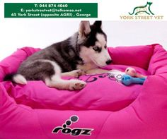 For those pooches who prefer a more luxurious style bed with spongy walls and a super-soft cushion, try the #Rogz dog beds from #YorkStreetBeds. #ilovemydoghttps://www.facebook.com/Yorkstreetvetshop/photos/pb.646016452164207.-2207520000.1439134251./805594766206374/?type=3