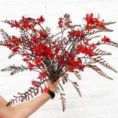 """Ellen Frost on Instagram: """"What's hot? 🔥This red crocosmia from @belvederefarmflowers is perfect for this summer heat! Buying local means getting the most…"""" Crocosmia, Buy Local, How To Get Warm, Summer Heat, Spring Flowers, Be Perfect, Frost, June, Red"""