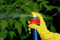 В настоящее время инвентаризация запасов устаревших, непригодных к использованию и запрещенных пестицидов проходит во многих странах. В России, например, в результате проведенной первичной инвентаризации на начало 2003 года официально выявлено 24 тыс. тонн пестицидов с истекшим сроком годности